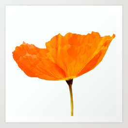 One And Only - Orange Poppy White Background #decor #society6 #buyart Art Print