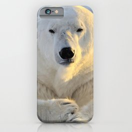Lovely Giant Adult Bear Sitting On Cold Ground Close Up Ultra HD iPhone Case