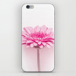 Pink gerbera iPhone Skin