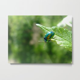 Green beetle Metal Print