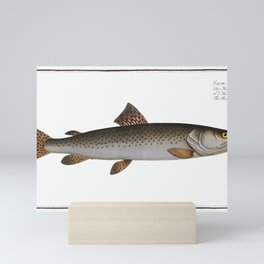 River-Salmon (Salmo Hucho) from Ichtylogie, or Natural History  General and Particular of Fishes (17 Mini Art Print