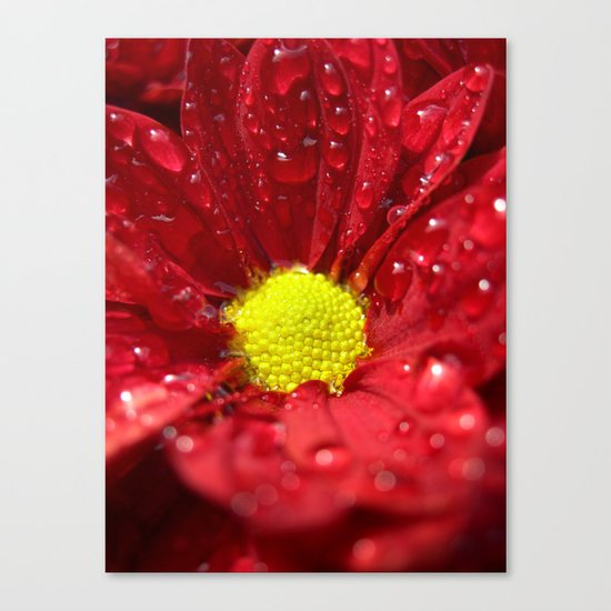 wet bloom I Canvas Print