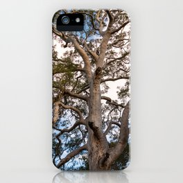 Scribbly Gum Tree iPhone Case