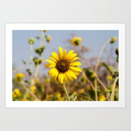 Sunflower - Bright Wildflower on a Summer Day Art Print