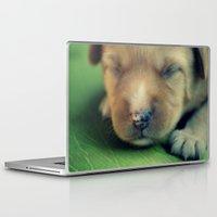 puppy Laptop & iPad Skins featuring Puppy by Luiza Lazar