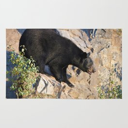 Black bear on a cliff in Jasper National Park Rug
