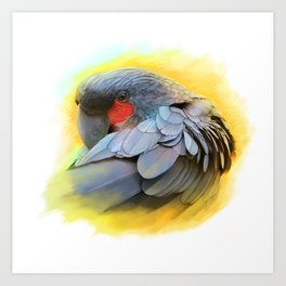 Black Palm Cockatoo realistic painting Art Print