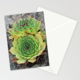 Houseleek Succulents Stationery Cards