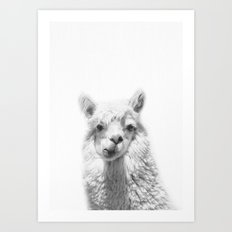 Alpaca Photograpgy, Alpaca Art Print, Animal Art, Animal Portrait, Animal Photography, Nursery Art Art Print