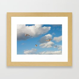Greedy Gulls Framed Art Print