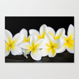 Plumeria obtusa Singapore White Canvas Print