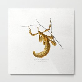 Giant prickly stick insect scientific illustration art print Metal Print