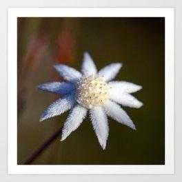 Not So Lesser Flannel Flower Art Print
