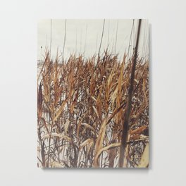 Field of golden grass Metal Print