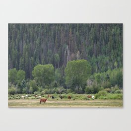 Happy Hour on the Ranch Canvas Print