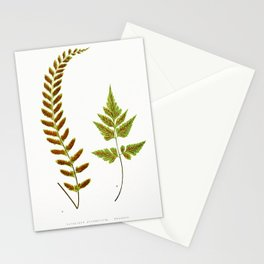 Edward Joseph Lowe - Asplenium Pulchellum and Asplenium Pumilum Stationery Cards