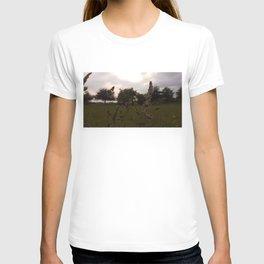 Sunset over the Wild Grass T-shirt