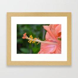 Coral Hibiscus Flower Framed Art Print