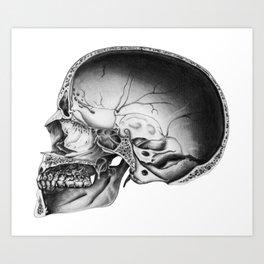Halved Human Skull Art Print