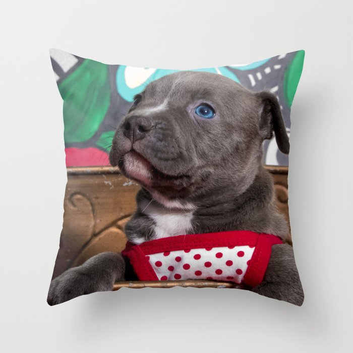 sweet blue eyed pitbull puppy girl in a red and white polka dot