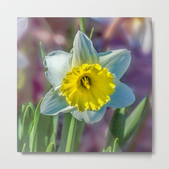 Narcissus Metal Print