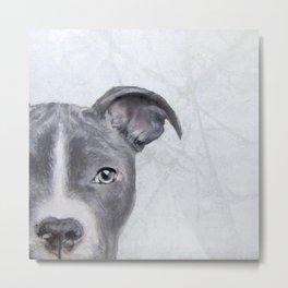 pit bull silver grey tone Metal Print