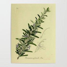 Botanical Rosemary Poster