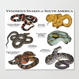 Venomous Snakes of South America Canvas Print