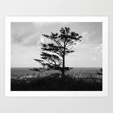 Tree Beside the Ocean Art Print