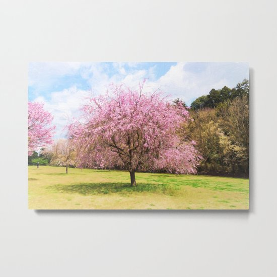 Beautiful cherry blossoms Metal Print