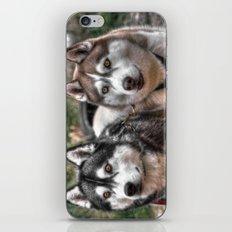 Siberian Huskys iPhone & iPod Skin