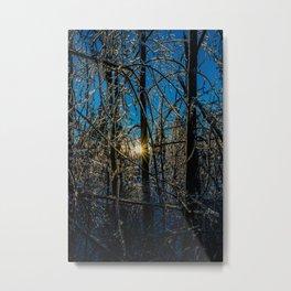 Frozen ice trees Metal Print