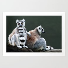 Ring Tailed Lemurs Art Print