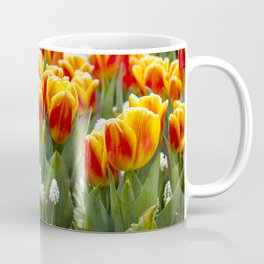 Red and Yellow Stripes Tulips with White Blossoms underneath in Amsterdam, Netherlands Coffee Mug
