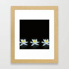 Waterlily Flowers On Black Background #decor #society6 #buyart Framed Art Print