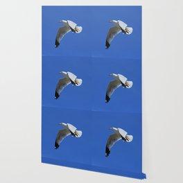 Ring-Billed Gull in Flight Wallpaper