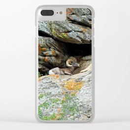 Big Horn Ram at Rest  Clear iPhone Case