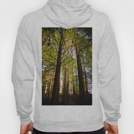 Within The Redwoods Hoody