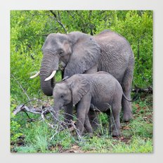 african elephant mother with baby Canvas Print