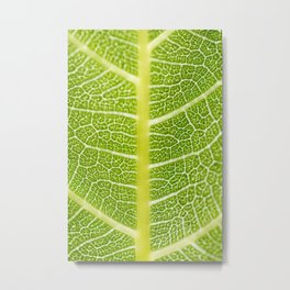 Textures of the leaf of a fig tree Metal Print