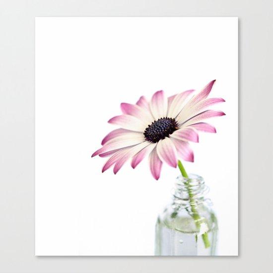 delicate single daisy flower Canvas Print