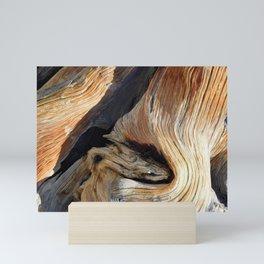 Whorl Juniper Tree Trunk Mini Art Print