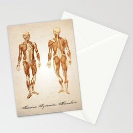 Muscular System Human Anatomy Art Print Stationery Cards
