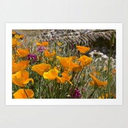 Cailfornia poppies Art Print