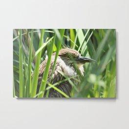 Hiding Bird Photography Print Metal Print