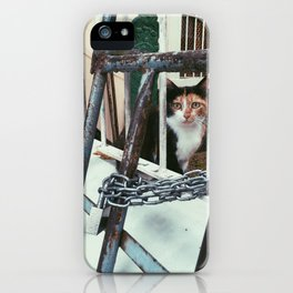 istanbullu kedi iPhone Case