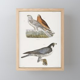 6  7 The Marsh Harrier (Circus uliginosus) 8 The Duck Hawk (Falco anatum)  from Zoology of New York Framed Mini Art Print