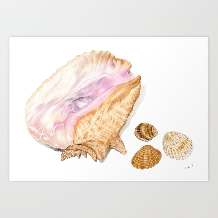 Seashells 01 Art Print