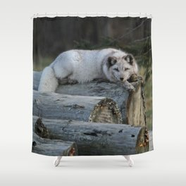 Arctic fox resting on logs Shower Curtain