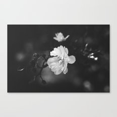 february flower Canvas Print